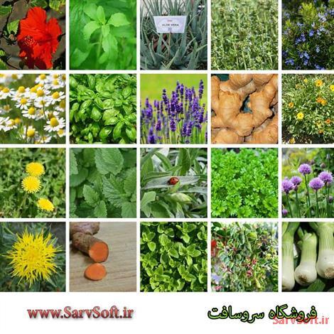دانلود سایت فروشگاه گیاهان دارویی با ای اس پی دات نت